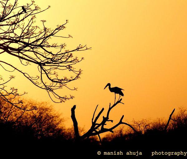 Colours Of Nature Nature Wild India Ranthambore National Park Bird Photography
