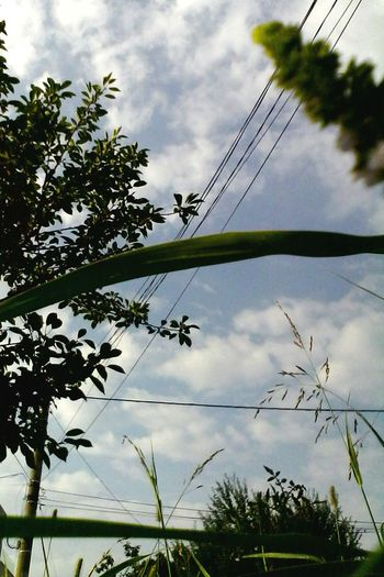 Street Photography Cloudscape Power Line  Plants 2016 Showcase: 2016 Outdoors No People Eyeem Market Ionitaveronica Wolfzuachis @wolfzuachis Edited By @wolfzuachis Sky Cloud - Sky Nature Enhanced Power Line  Green Skyporn Day Nature Low Angle View On Market Premium EyeEm Selects