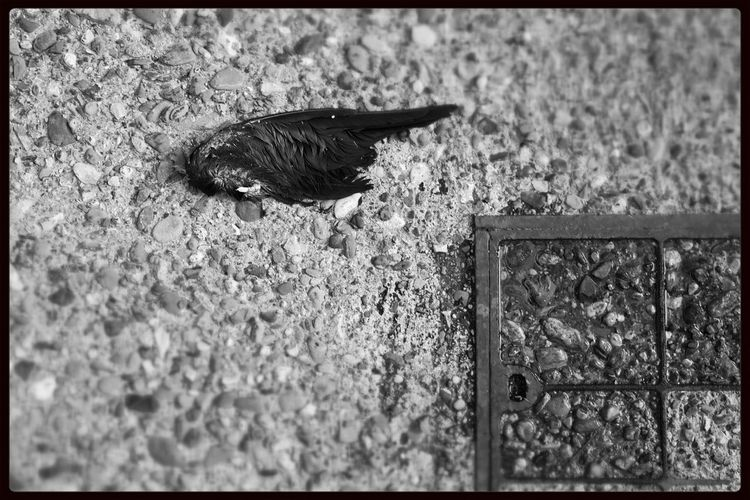Dead Bird I See Dead Birds n Shoot The Street With Pointer Footwear