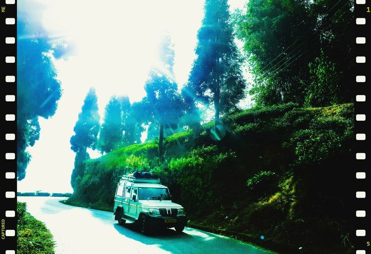 Cars on road amidst trees in forest against sky
