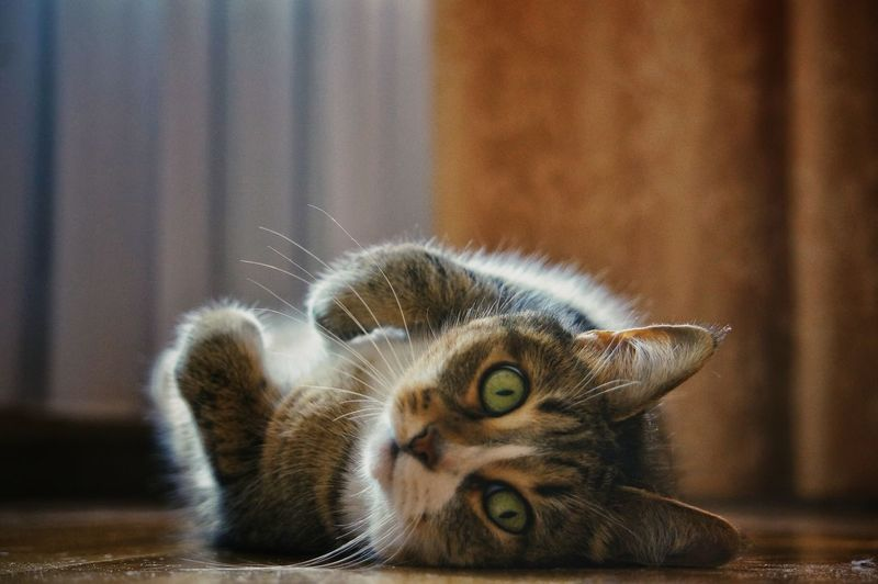 Close-up of cat lying on table at home