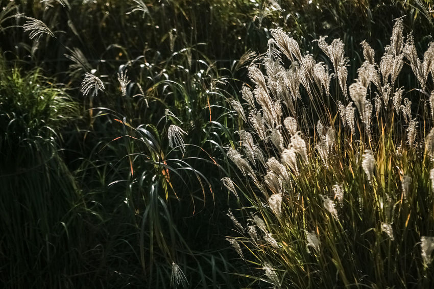 Sky Park Silver Grass Autumn Autumn Color Wind Power Generator Seoul Korea Fall Beauty