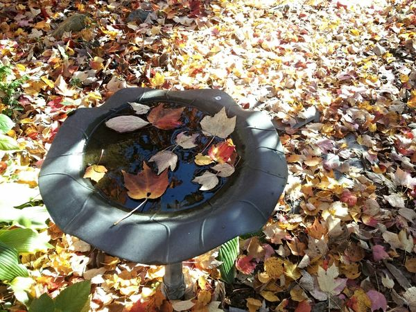 Birdbath Leafmania Autumn Leaves Eye4photography