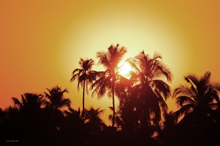 Clicked On Nikon D3300 Palm Tree Sky Growth No People Sunlight Outdoors Sun Low Angle View Beauty In Nature Scenics