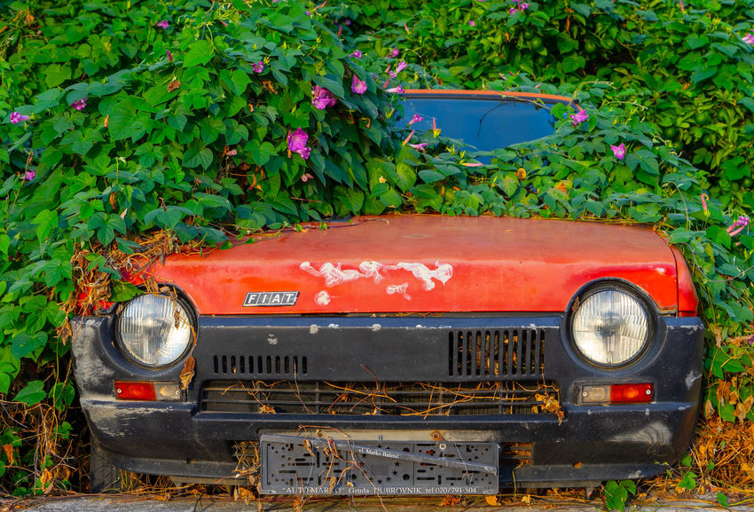 Mode Of Transportation Land Vehicle Plant Transportation Red Day Green Color Motor Vehicle No People Car Nature Growth Leaf Plant Part Land Outdoors Metal Abandoned Headlight Ruined