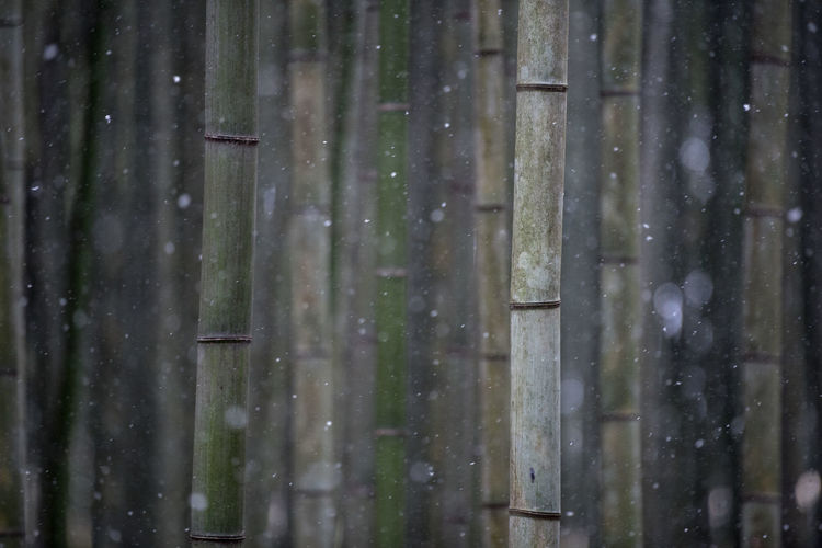 No People Wood - Material Full Frame Forest Close-up Land Focus On Foreground Day Outdoors Backgrounds Plant Growth Trunk Tree Tree Trunk Nature Pattern Tranquility Beauty In Nature Bamboo - Plant Snowing