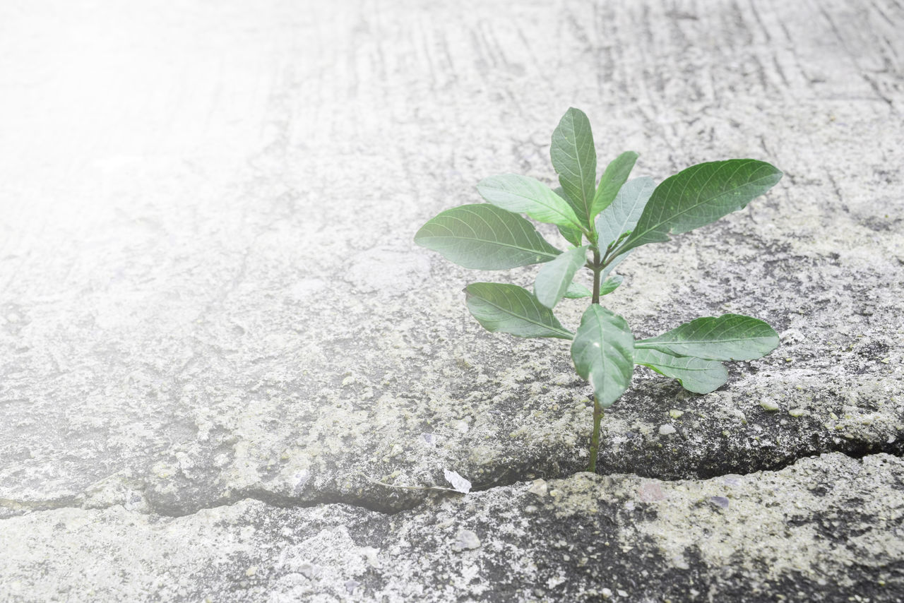 leaf, green color, plant, nature, growth, no people, close-up, fragility, freshness, outdoors, day, beauty in nature