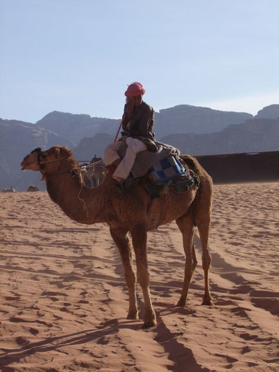 Bedouin with Camel Ride Hire, Wadi Rum Animal Bedouin Blue Sky Camel Composition Famous Place Full Length Jordan Landscape Mountains National Park No Incidental People One Animal One Person Outdoor Photography Riding Saddle Sand Sitting Sunlight And Shadow Tourist Attraction  Tourist Destination Traditional Clothing Wadi Rum Working Animal
