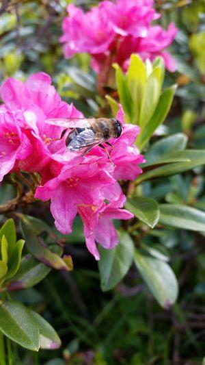 Flowers Bee 🐝