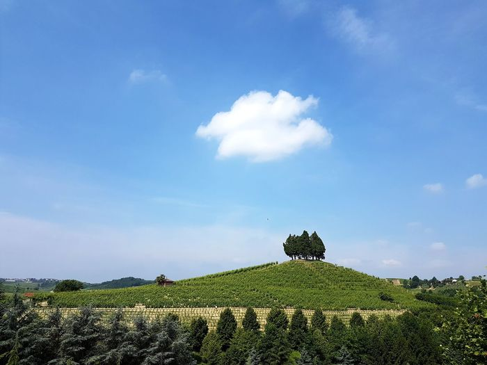 Growth Cloud - Sky Beauty In Nature Nature Plant Tranquility Sky Day Outdoors No People Freshness Vineyard Langhe Piedmont Italy Roero Tree Area