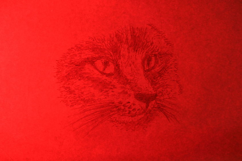 The face of cat wrote by pencil on white paper in red light Diamond Eyes  Rat Textures Animal Black And White Close Up Close-up Cute Day Fur Ideas Indoors  Lazy Animal Long Mustache Long Tail Nature Night No People Outdoors Paper Pencil Drawing Pet Portrait Red Texture
