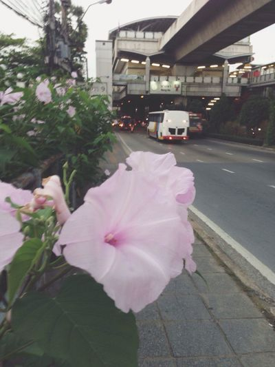 Bangkok Bkk Thailand Morning Flowers