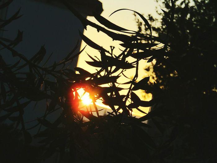 Illuminated Sunset Nature