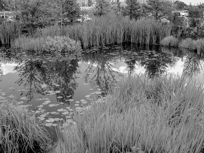 Marsh Pond black and white friday Water Reflection Lake Plant Nature Day No People Tranquility Beauty In Nature Outdoors Full Frame Growth Tree High Angle View Grass Waterfront Backgrounds Scenics - Nature