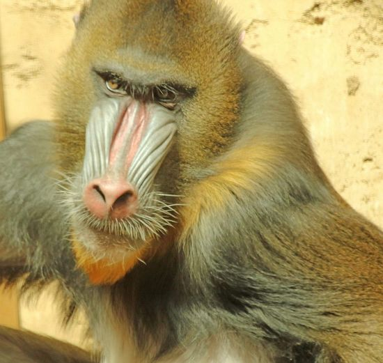 Monkey Business Colour Of Life Nose