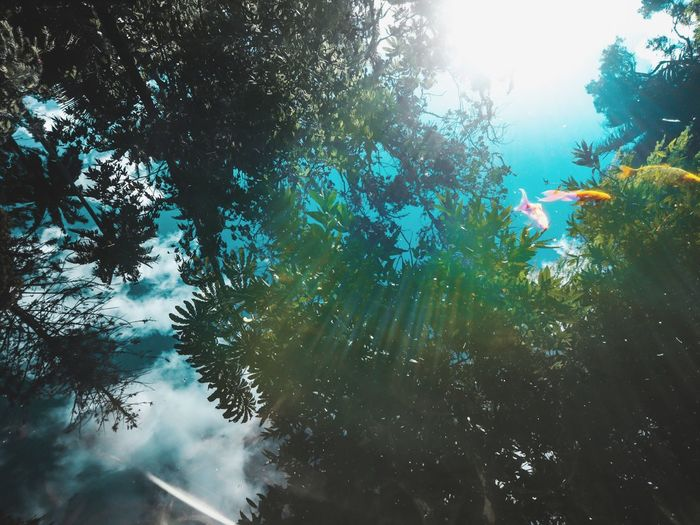 Flying Fishes Flying Fish Tree Low Angle View Nature No People Day Growth Outdoors Sky Forest Beauty In Nature Water UnderSea The Week On EyeEm Reflections In The Water Reflection Lake Investing In Quality Of Life
