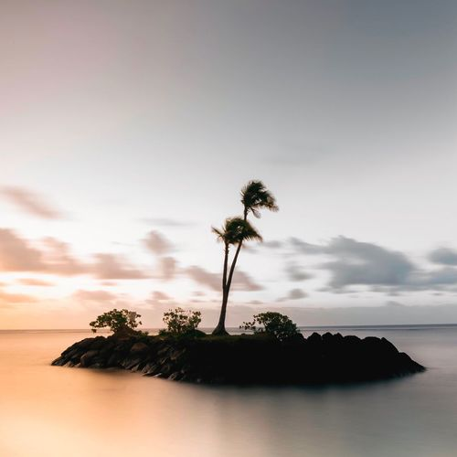 Palm Tree Sea Tree Nature Beach Sky Horizon Over Water No People Beauty In Nature Tranquility Scenics Tranquil Scene Water Sunset Outdoors Day Single Tree The Secret Spaces The Secret Spaces The Great Outdoors - 2017 EyeEm Awards Neighborhood Map Lost In The Landscape