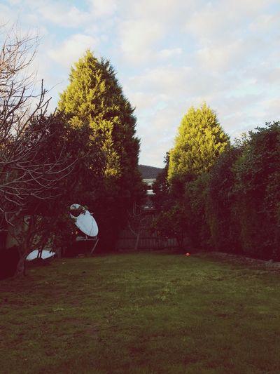 Good morning! ^_^ Morning Sun Trees Pretty