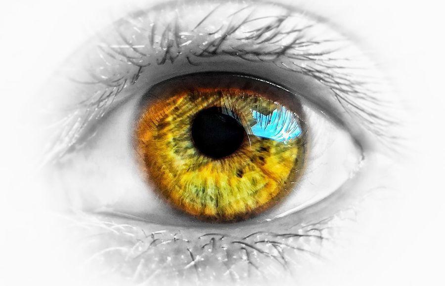 Human Eye Eyelash Eyeball Eyesight Human Body Part Sensory Perception Iris - Eye Iris Macro People One Person Real People Day