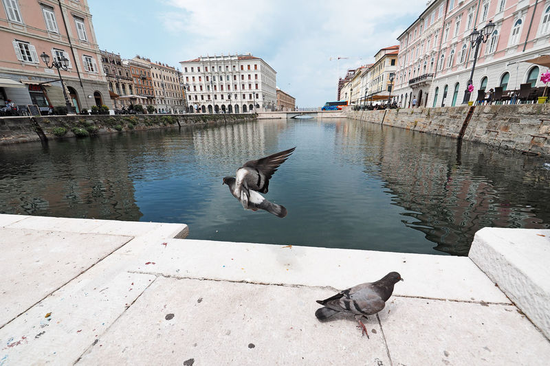 Grande canal in Trieste, Italy Grande Canal Trieste Trieste, Italy Animals Architecture Bird Building Exterior Built Structure Canal City City Birds City Pigeon Day Grande Canal Trieste Hand Italy Italy❤️ Nature Pigeon Pigeons Pigeons Birds Pigeons Everywhere Pigeons In Flight Triestestreetlife Water