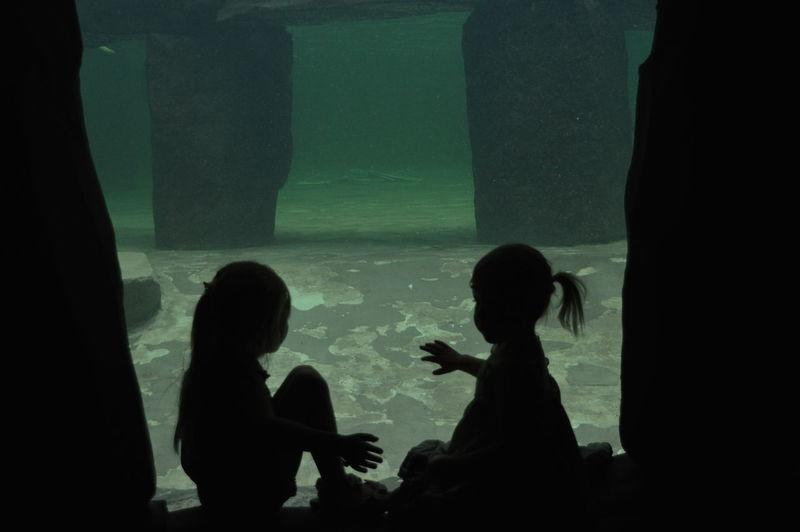 Silhouette of fish in aquarium