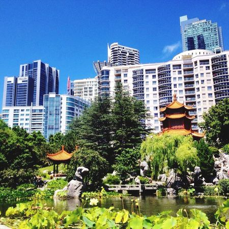 Sydney Australia Orient Occidental Japanese Garden Architecture No People Amazing Freedom Everything In Its Place IPhone Traveling Light EyeEm Gallery Happy Temple Bluesky EyeEm Nature Lover Sun Skyscrapers