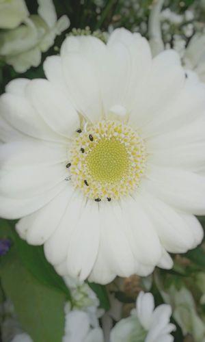 Natural Beauty Nature Naturelovers Nature Photography Flowers,Plants & Garden Flowers Lens Blur Flowerporn Garden