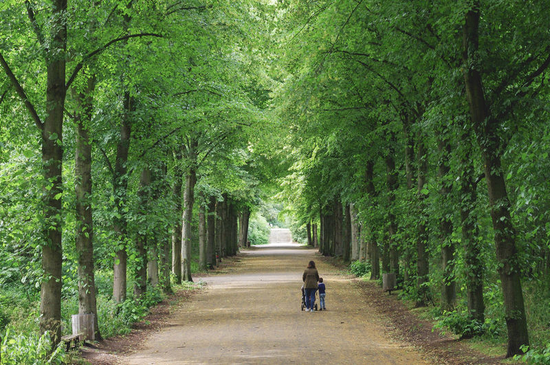 Family Mother Path Woman Beauty In Nature Day Diminishing Perspective Footpath Green Color Park Plant Real People Rear View Son Tree Treelined Walking