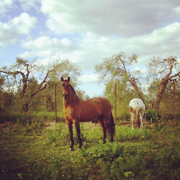 Horses Caballo ESPAÑOL Caballos Beautiful