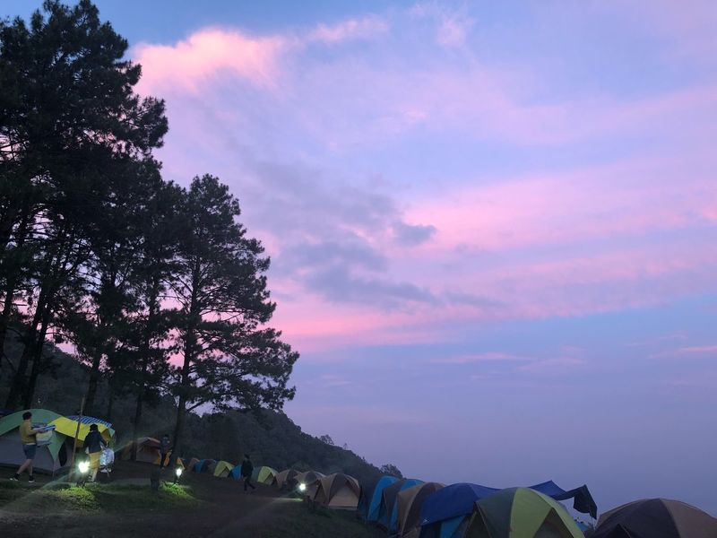 Tent Camping Camping Sky Tree Plant Sunset Cloud - Sky Beauty In Nature Nature Pink Color Outdoors