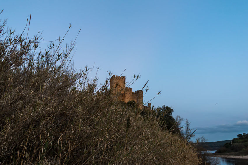 Castle of Abrantes Portugal Beauty In Nature Blue Clear Sky Day Grass Low Angle View Nature No People Outdoors Plant Sky Tree