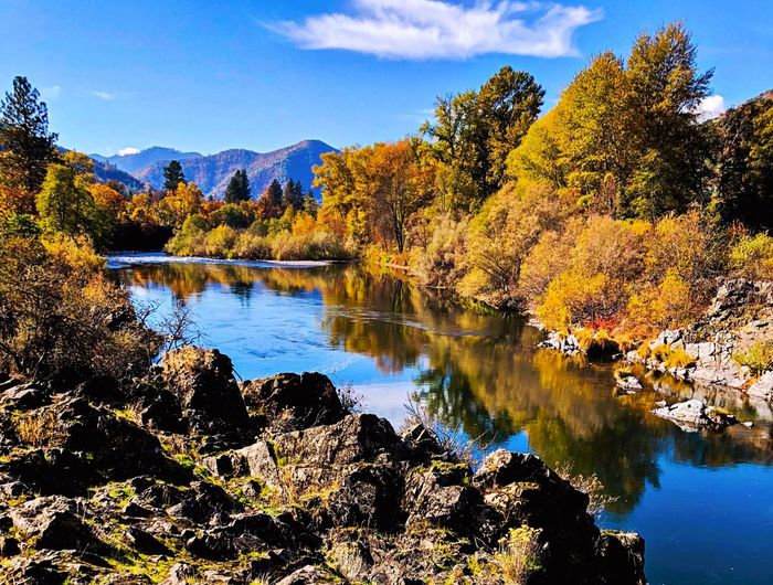 The Rogue River in Southern Oregon with reflections of trees and blue water EyeEm Gallery EyeEm Best Shots EyeEm Selects EyeEmNewHere EyeEm Best Shots - Nature EyeEm Nature Lover EyeEmBestPics EyeEm Best Edits Reflection Sunlight Flowing Water River View Riverside River Water Reflection Tree Sky Plant Lake Beauty In Nature No People Scenics - Nature Waterfront