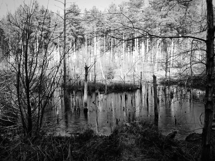 Forest Pond Reflections Logging Zone Working Forest