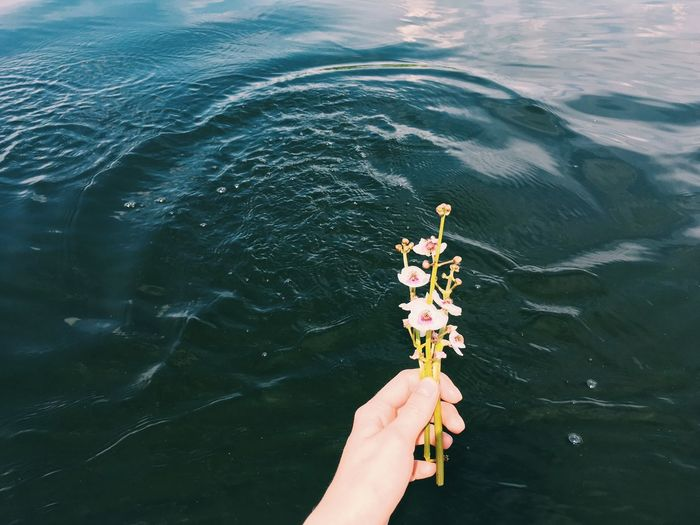 Cropped hand holding flowers against lake