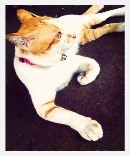My name is Stang ... Cute Cat