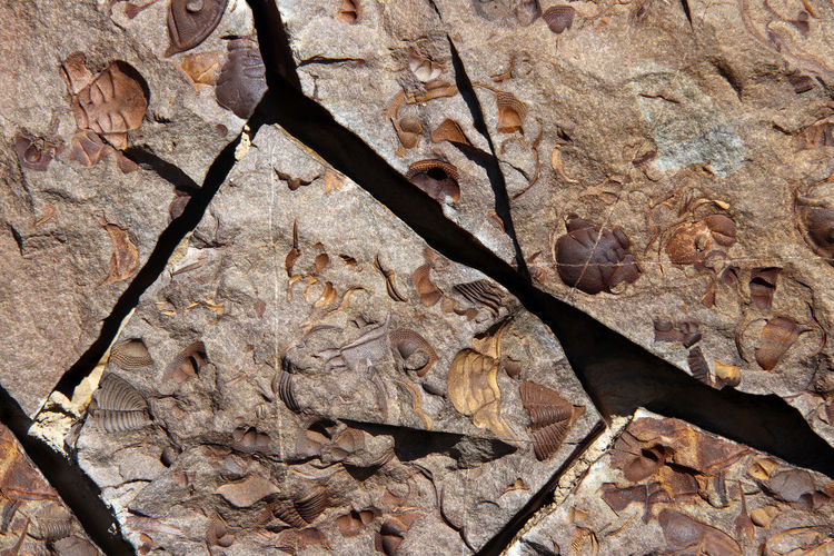 Close-up of dried leaves on rock