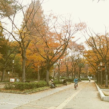 Utsubo park, Osaka city, Japan. Autumn Colors Autumn Leaves Japanese Culture Japan