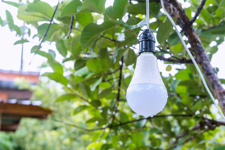Low angle view of light bulb hanging on tree