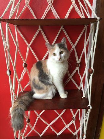Cat Love CatKeiko Gato Amor Vida Life PaixãoPorGatos Amomaisquechocolate