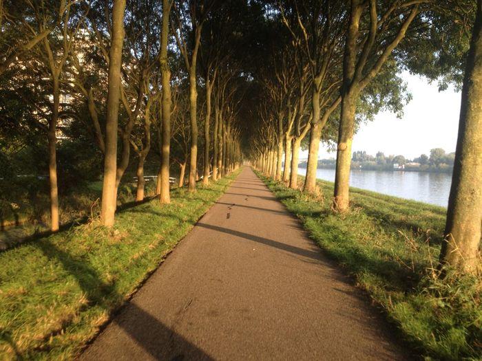 Light And Shadow Diemen Noord
