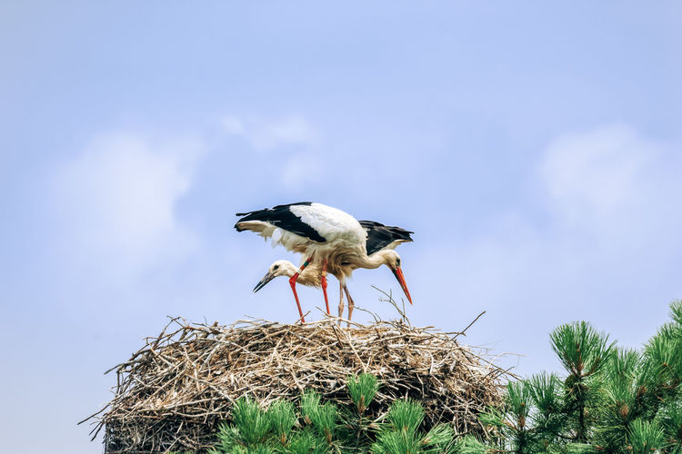 Low angle view of bird on nest against sky