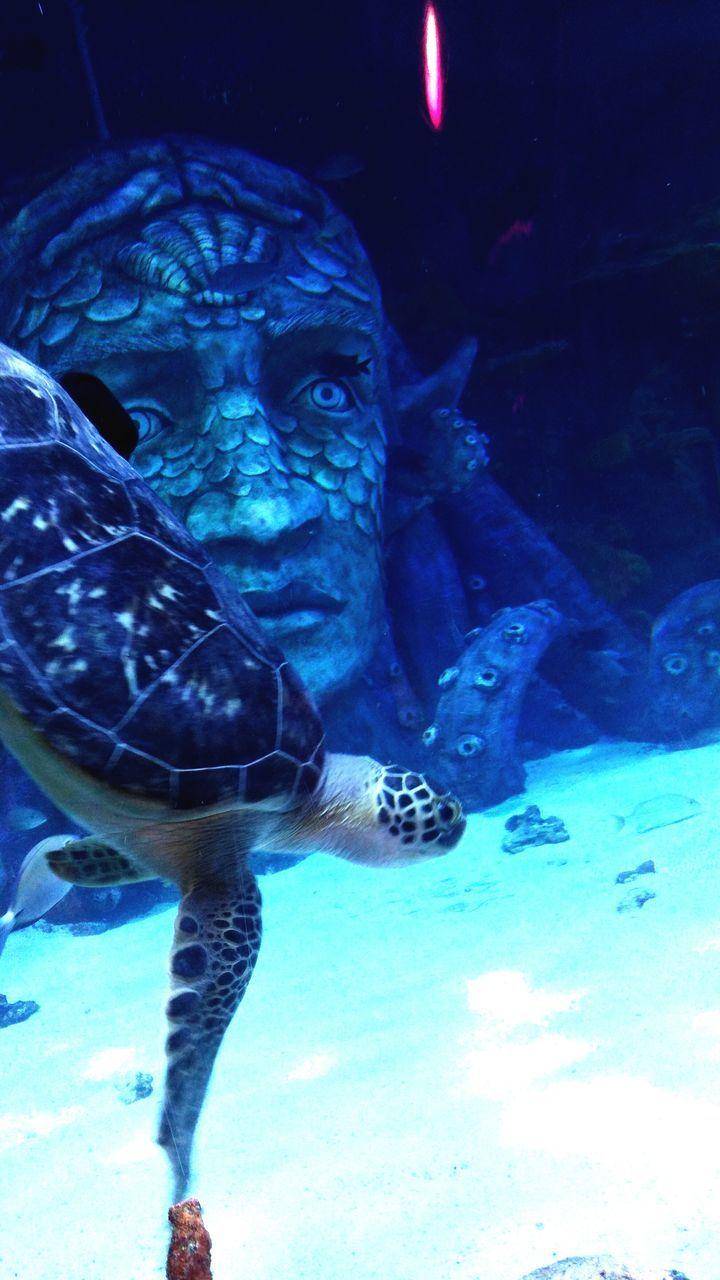 animal themes, water, animals in the wild, fish, wildlife, swimming, sea life, aquarium, underwater, animals in captivity, one animal, real people, animal wildlife, close-up, nature, indoors, reptile, day, undersea