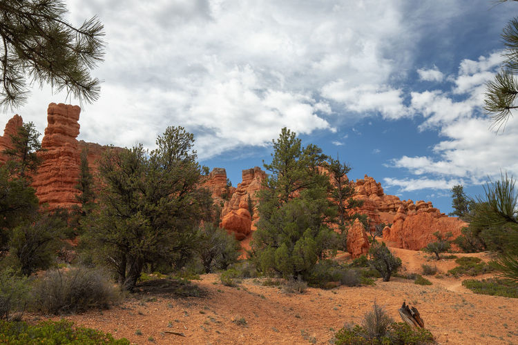 Red Canyon - the smaller brother of Bryce Canyon Plant Sky Cloud - Sky Beauty In Nature Tree Tranquil Scene Non-urban Scene Scenics - Nature Nature Day Outdoors Utah Red Canyon USA Tranquility Environment Land No People Landscape Growth Idyllic Mountain Travel Destinations Arid Climate