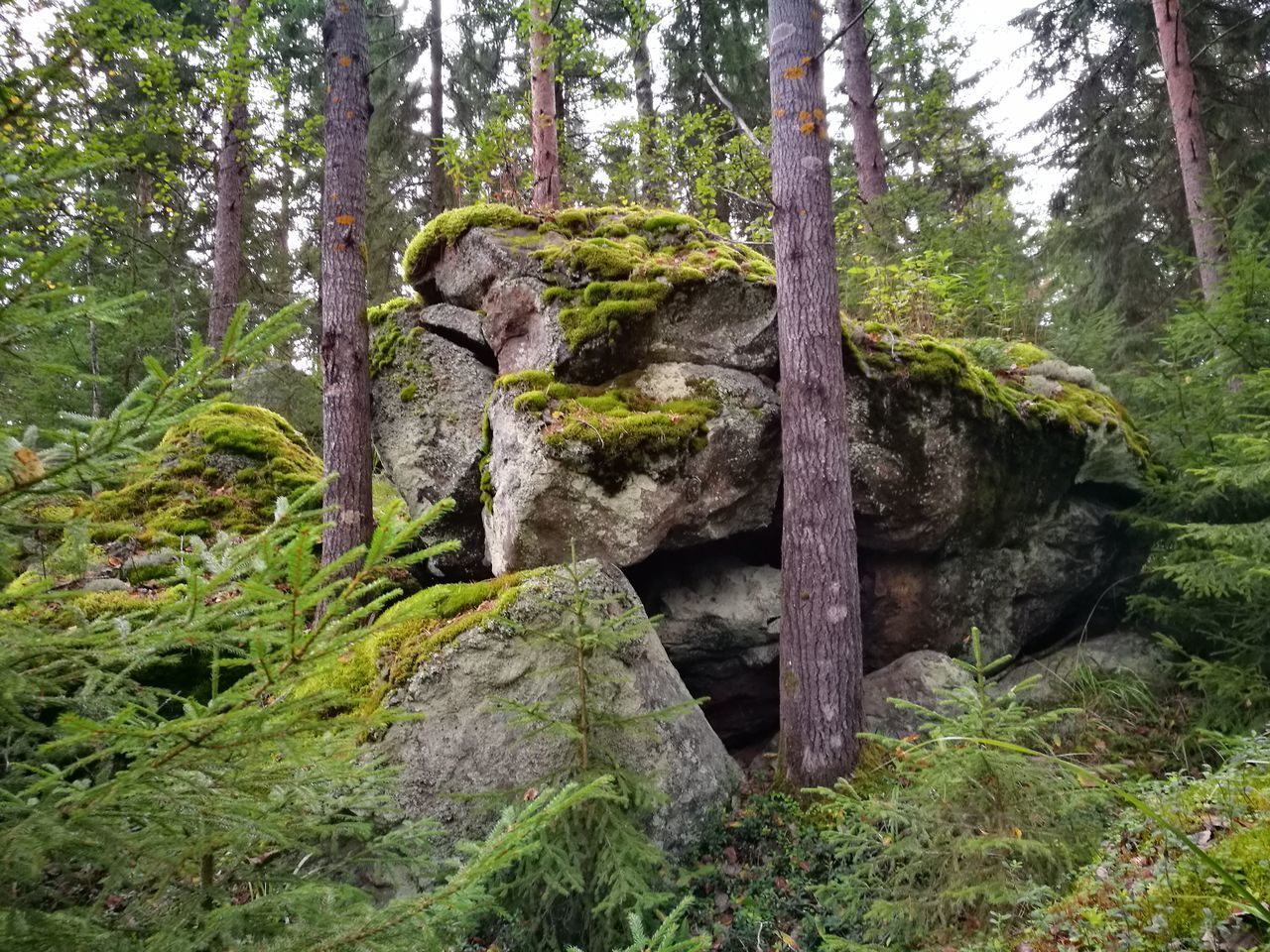 tree, forest, nature, tranquility, tree trunk, outdoors, beauty in nature, growth, tranquil scene, day, no people, scenics, green color, moss, rock - object, sky