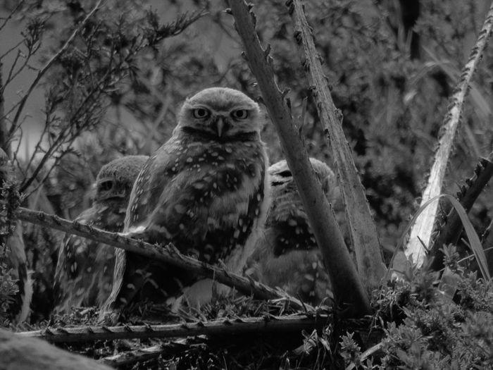 Bird Animal Nature EyeEm Selects Photo Like Nature Camera Follow Followme Followback Mexico Photography Fotografia Planet Earth First Eyeem Photo EyeEm One Animal Likes Beauty Bird Of Prey Animal Wildlife Day Fallow Earth EyeEmNewHere