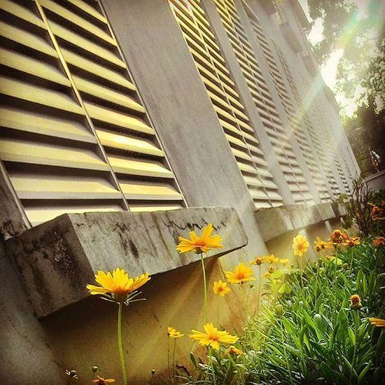 RAY of HOPE Tags : ➡ Hope Hopeinthemidstofdarkness Rayofhope flowers lightrail morningcapture flowerbloom