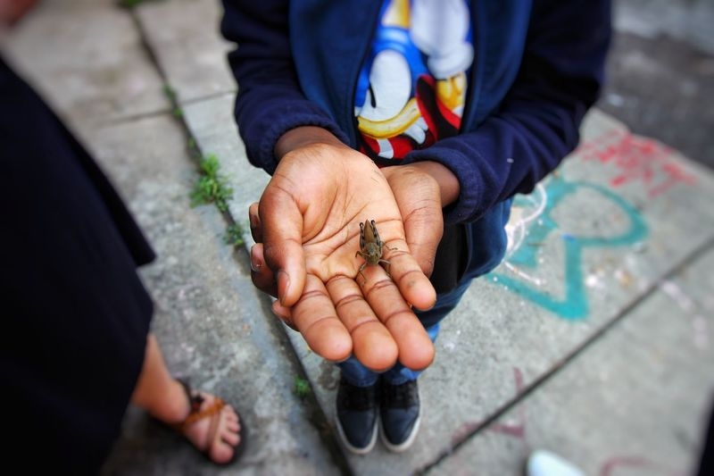 Low section of man holding insect while standing on street