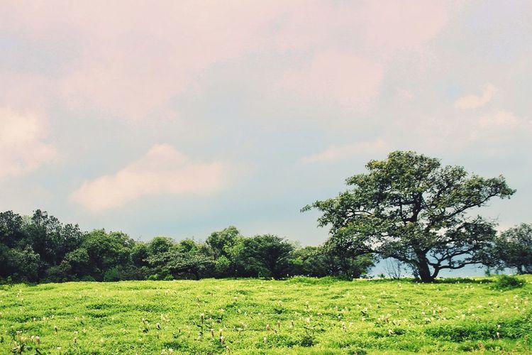 Freshness Tree