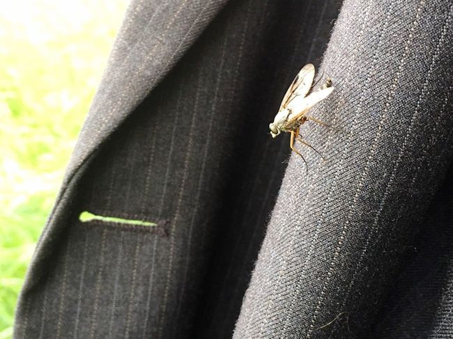 Insect Wildlife Fly Lapel Jacket Close-up Focus On Foreground