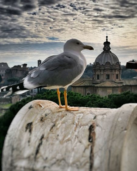 Roma cittàeterna Bird Animal Wildlife Moving Around Rome